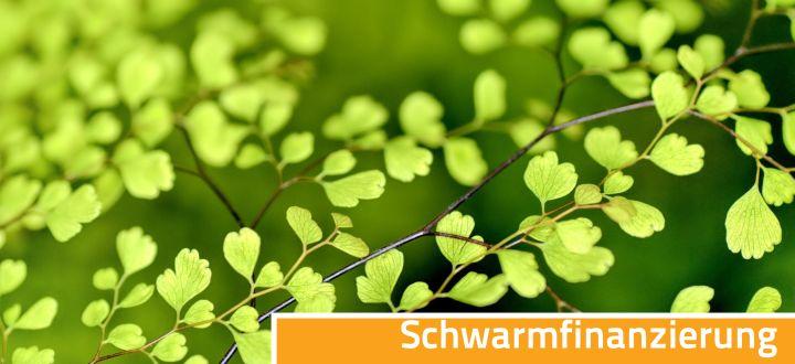-Crowdfunding Schwarmfinanzierung grüne Blätter